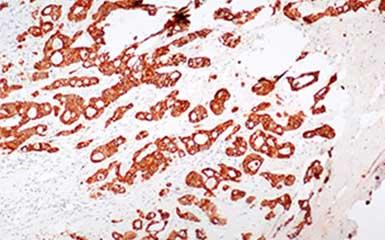 MSHOT microscope camera contributes to university publishing on Nature Communications