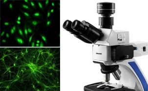 LED fluorescence microscope for Indirect Immunofluorescence