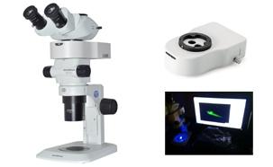 Stereo microscope Fluorescence illumination solution