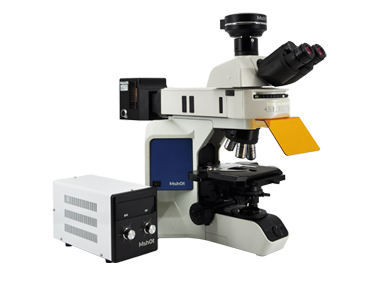 Fluorescence microscope MF43-N